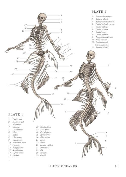 MermaidPage